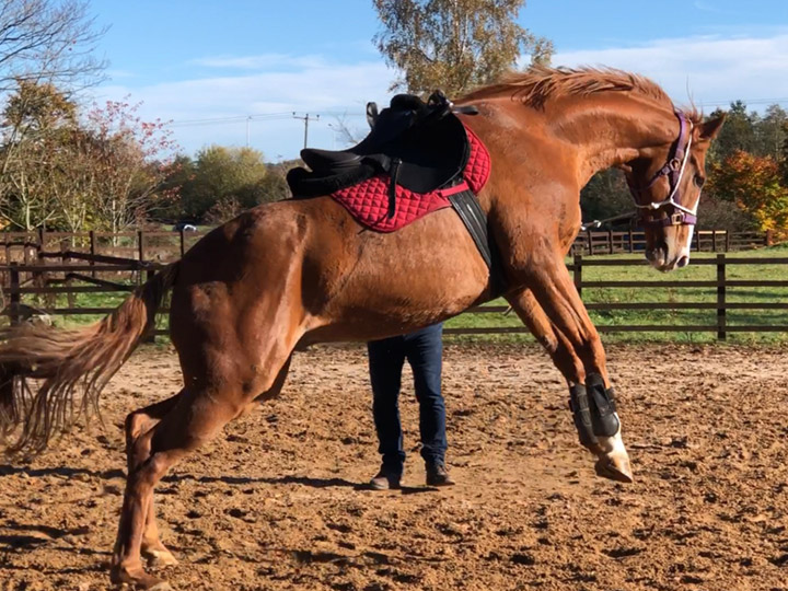 Overactive ex racehorse