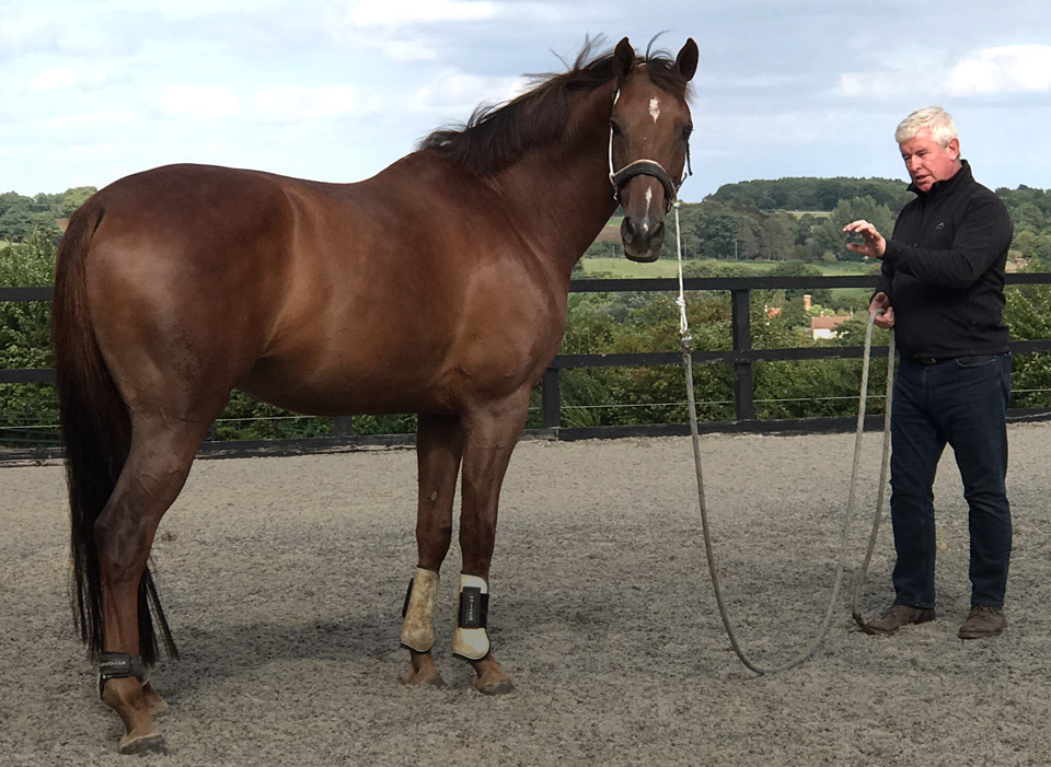 Horse hypnotherapy